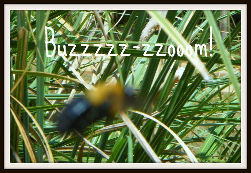 Buzzoooom